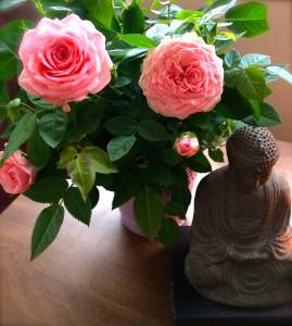 Buddha Roses